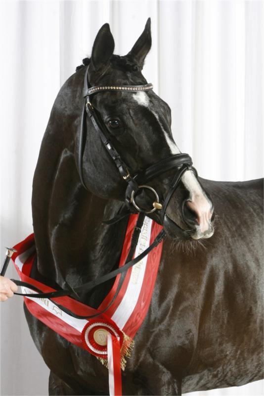 Bedækning video heste Salgsheste